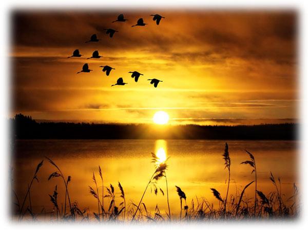 空の鳥をよく見なさい。種も蒔かず 刈り入れも 倉に納めもしない。 けれども天の父は彼らを養っていてくださる。マタイによる福音書6章26節