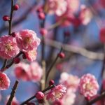 春を呼んでいます